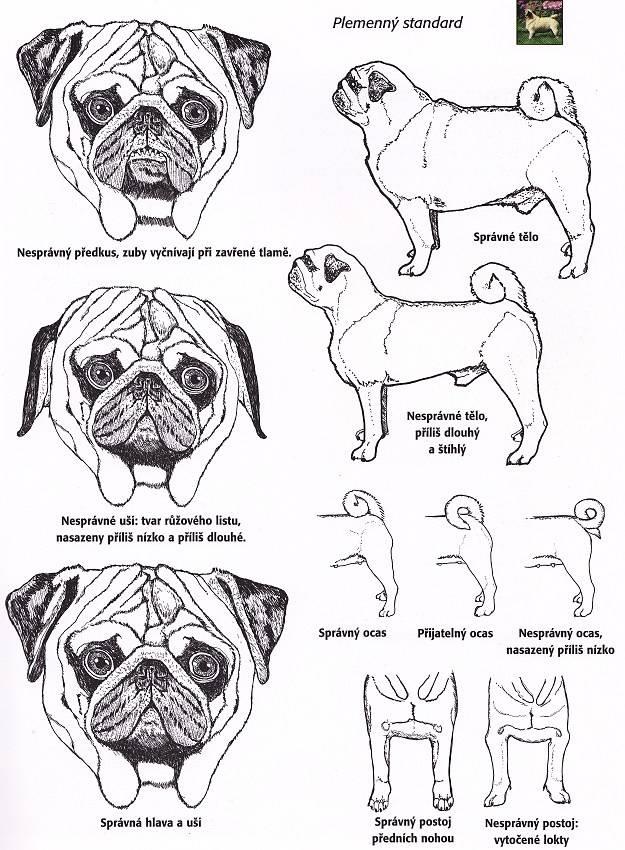 Как лучше всего называть мальчиков и девочек для собак породы мопс