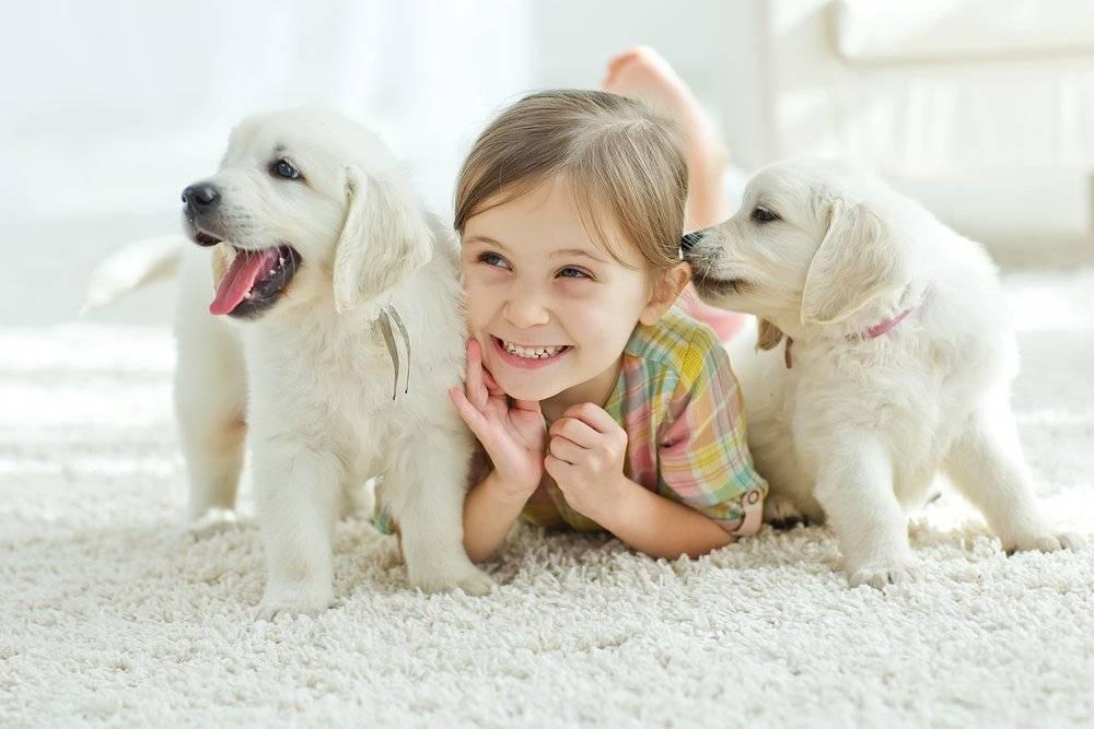 Какую породу собак выбрать для ребенка: топ 15 четверолапых нянек