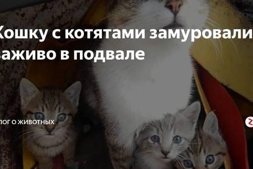 Куда сдать кошку: можно ли отдать питомца в приют навсегда?