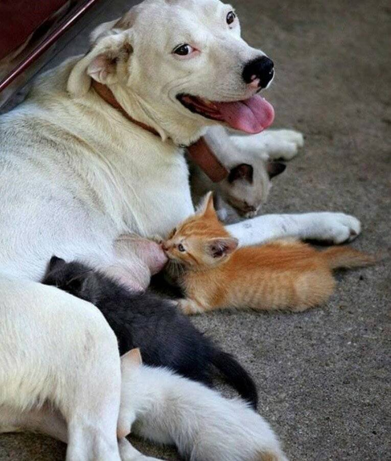 Спокойные породы собак для квартиры и дома: маленькие, небольшие, средние | petguru