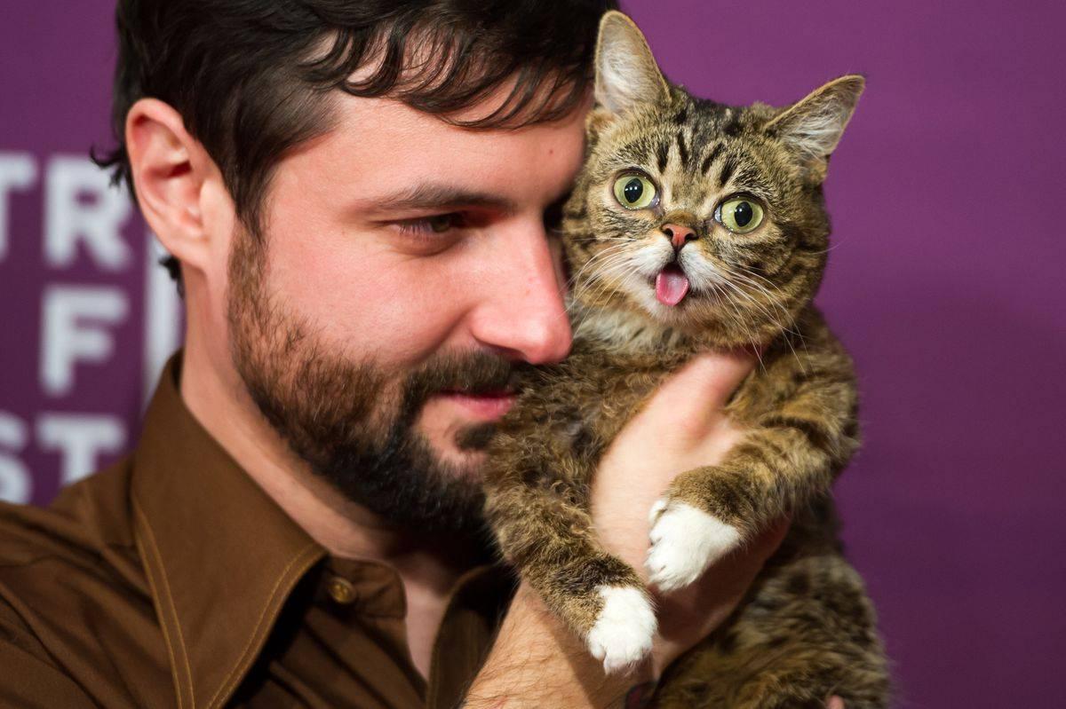 Знаменитые кошки   кошки и собаки вики   fandom