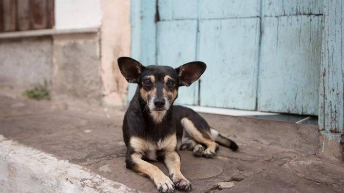Сколько лет живут собаки в среднем | в домашних условиях, уличные