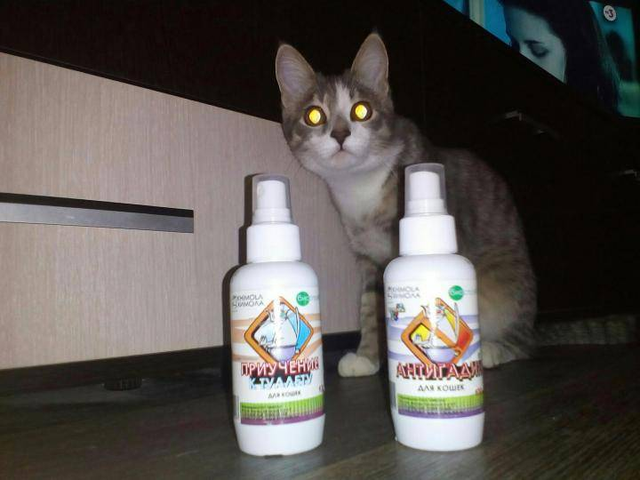 Антигадин для кошек: своими руками, какой лучше
