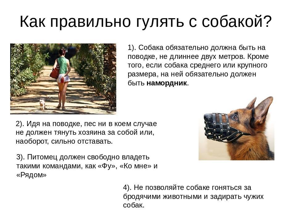 Воспитание взрослой собаки: как приучить и воспитать взрослую собаку в новом доме