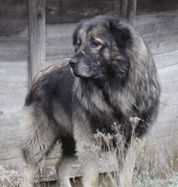 Виды овчарок — фото пород, названия, их описание и характеристика