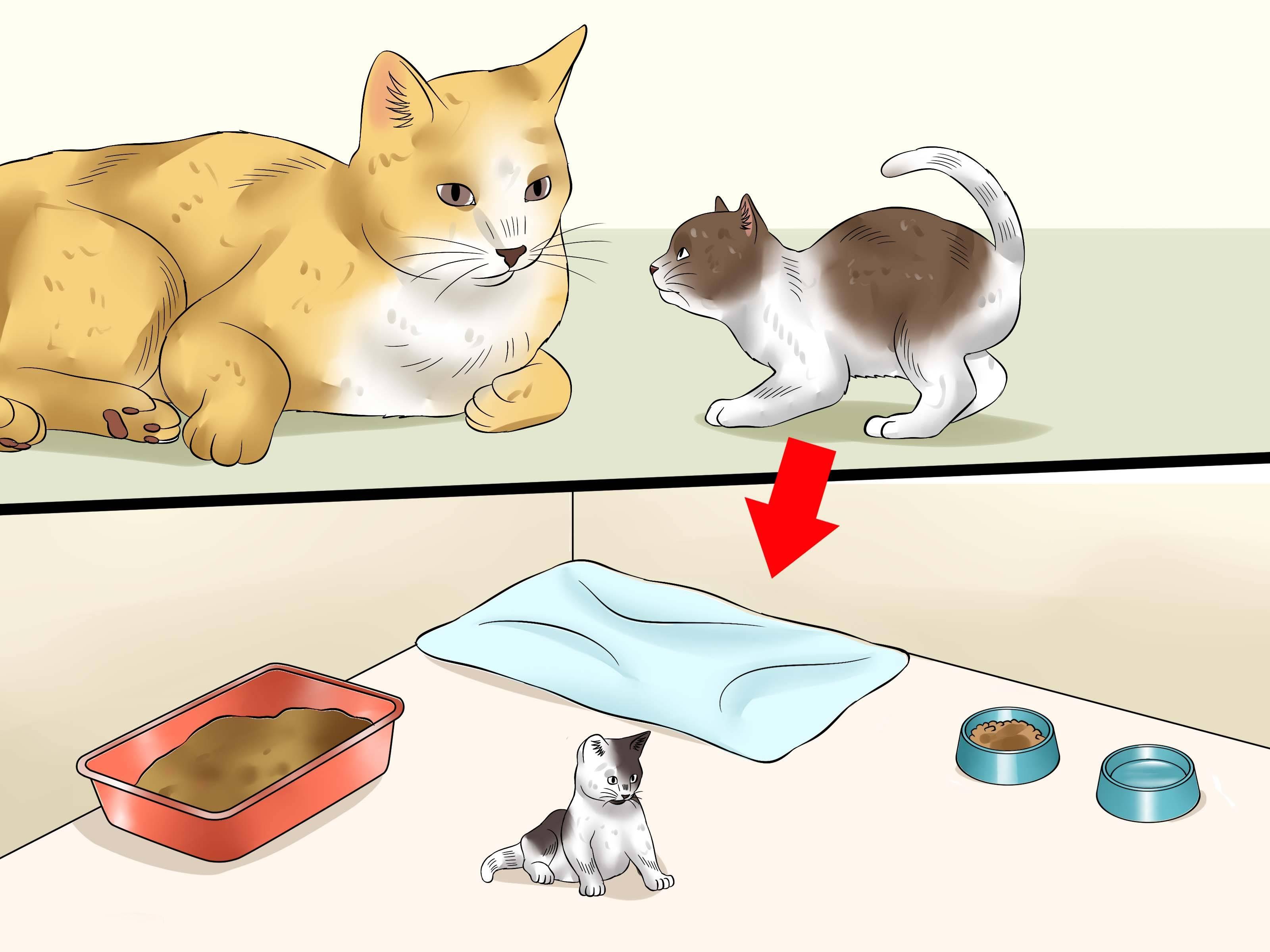 Кошка не ест и не пьет – что делать?