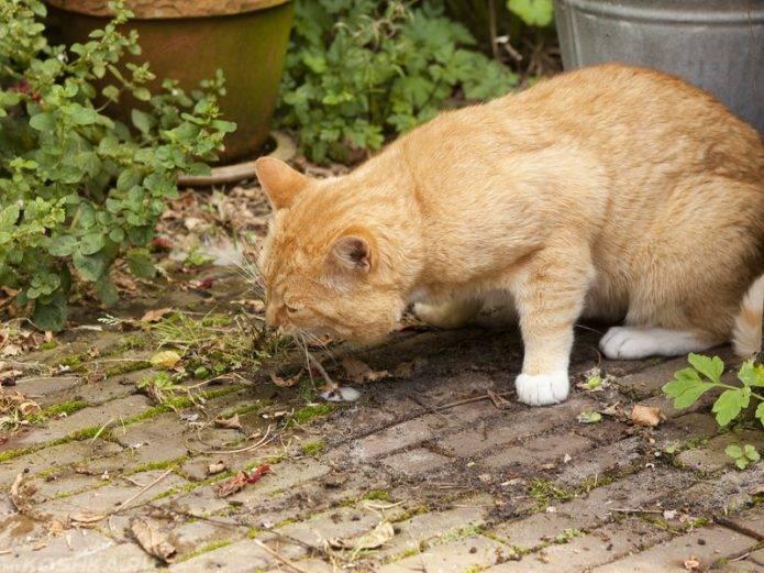 Что делать, если кошку рвет белой пеной и она ничего не ест?