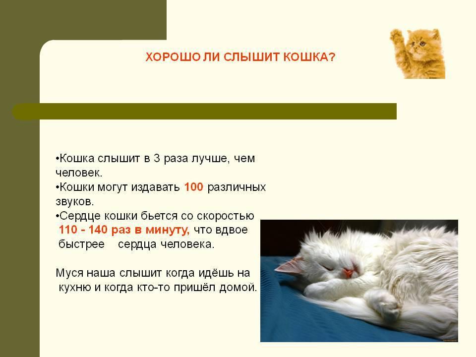 12 звуков, которые издают кошки, и что они означают