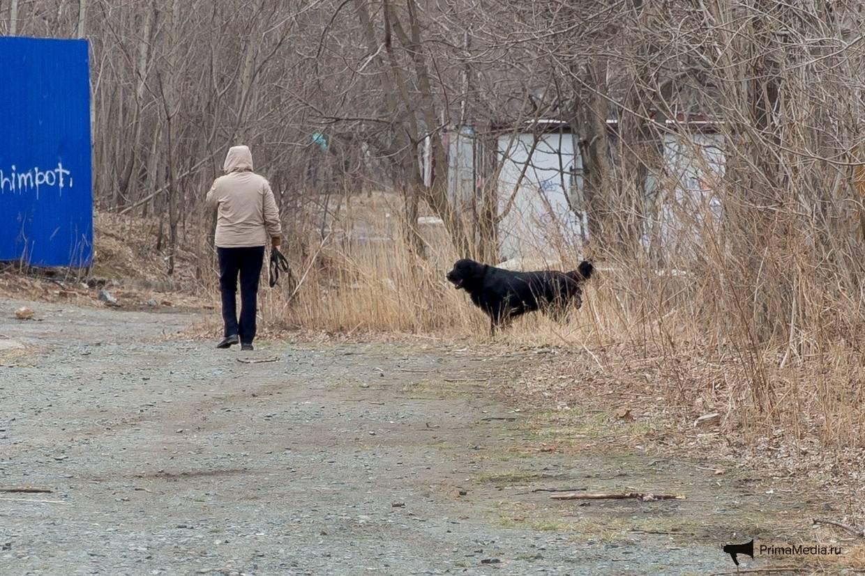 Какой штраф за выгул собаки без намордника и поводка