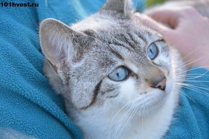 Мейн-кун: фото, описание породы, характер, отзывы и цены на котят