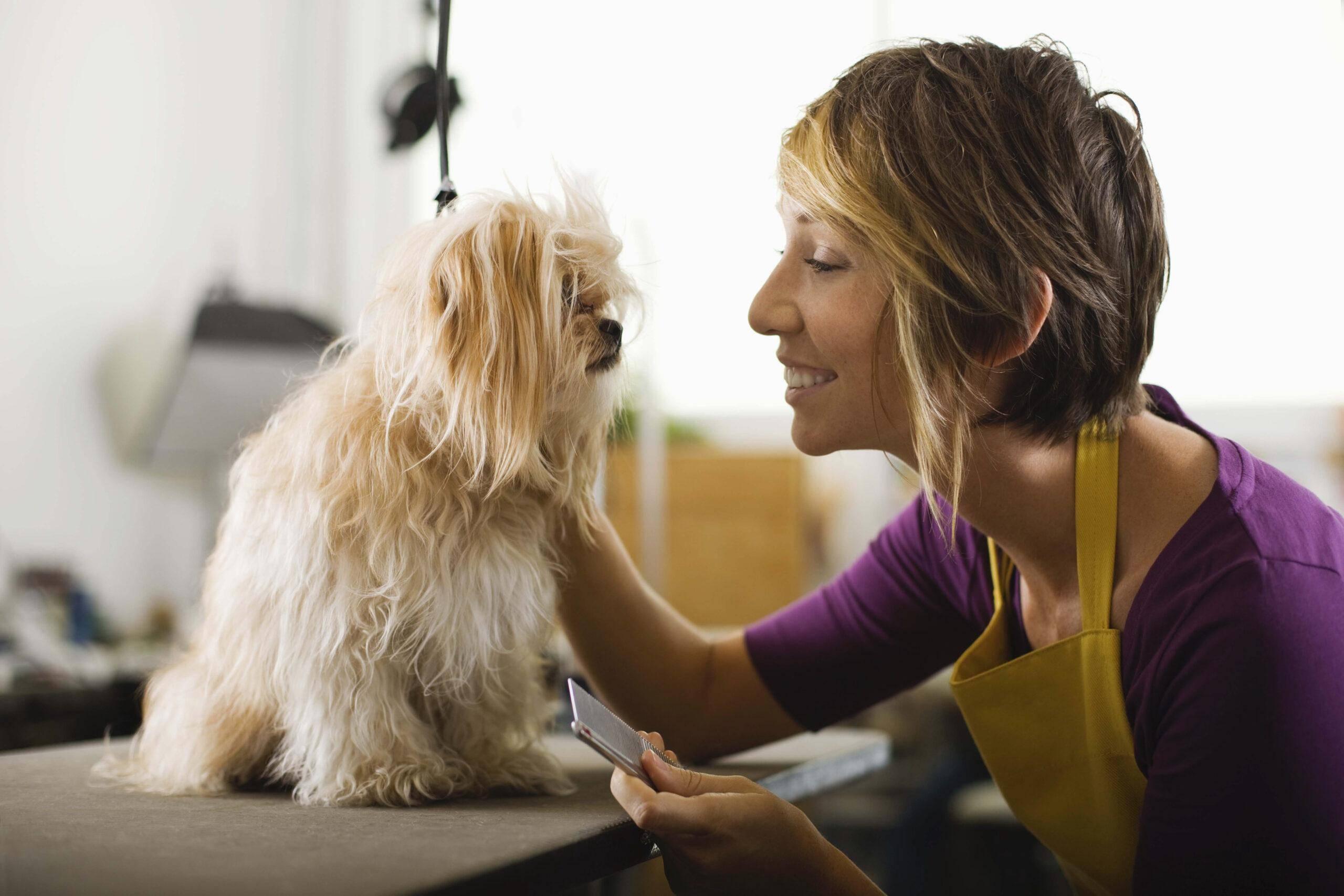 Какие инструменты нужны для грумера для стрижки собак?