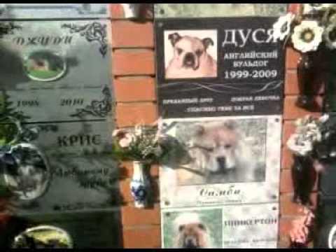 Обещали кремировать, а выбросили, как мусор: в петербурге нашли свалку трупов домашних животных