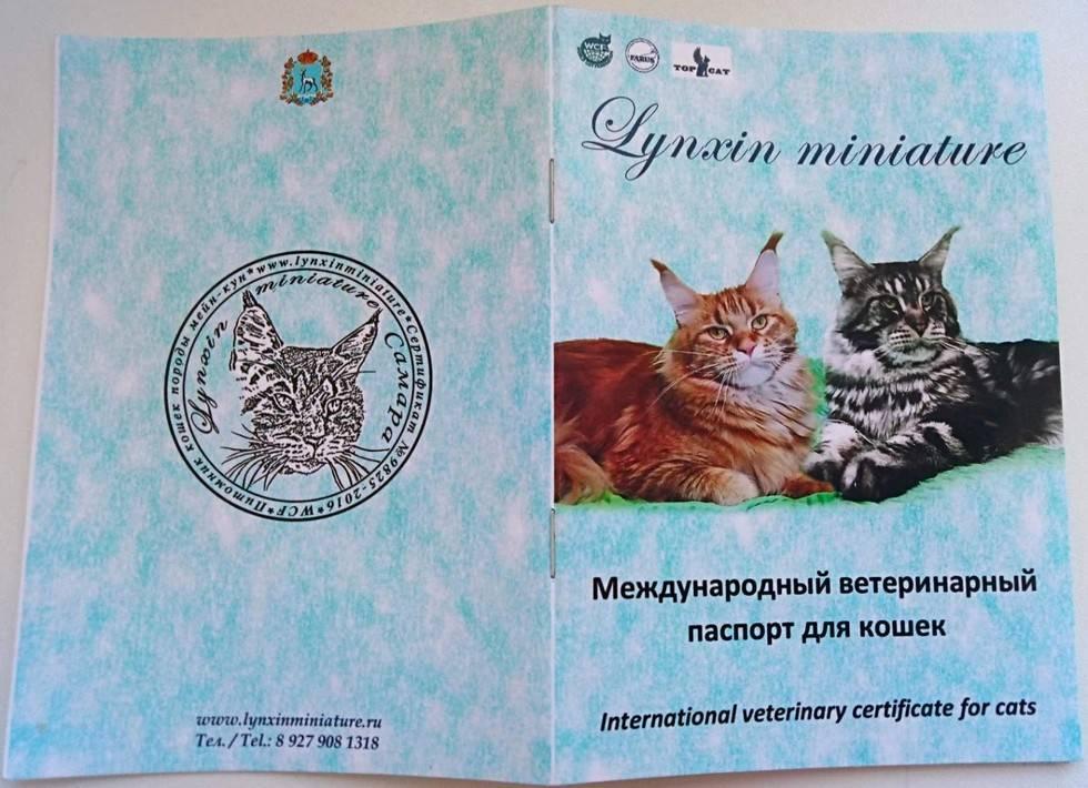 ᐉ ветеринарный паспорт для кошки - ➡ motildazoo.ru
