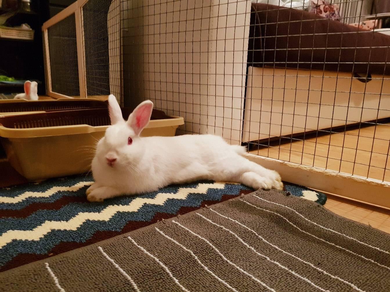 Как правильно содержать домашних кроликов и ухаживать за ними дома