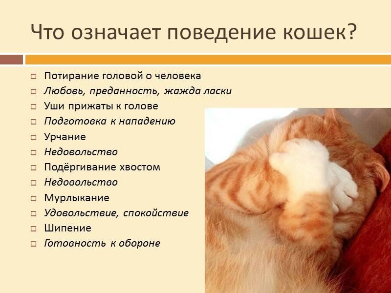 Помогите бездомным животным! возьмите кошку или собаку в дар!