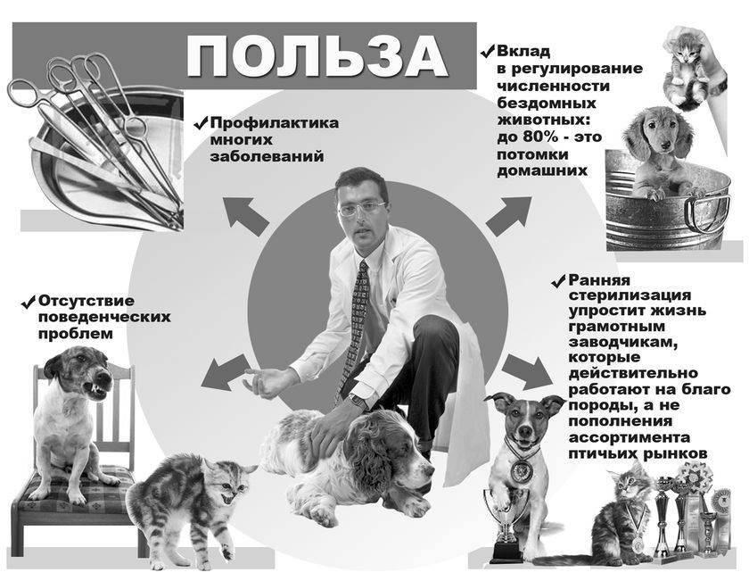 15 бесспорных доказательств, что кошки лучше собак
