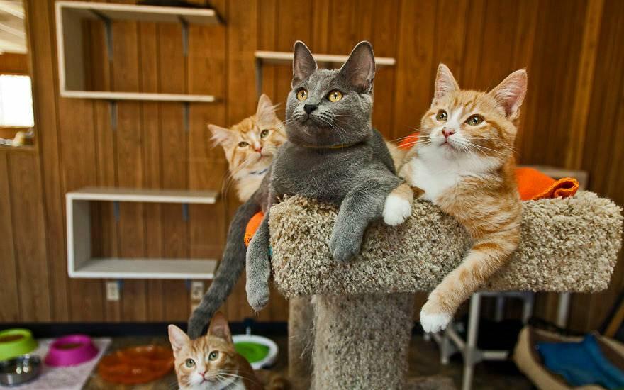 Комфорт во всем: как создать условия для жизни кошки даже в самой маленькой квартире