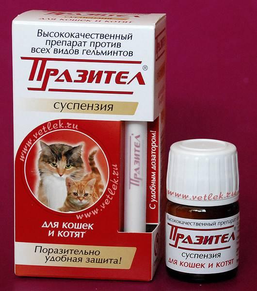 Глистогоним кошку дома: план профилактики, топ-10 лучших препаратов