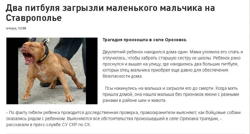 Штраф за выгул собаки без намордника и поводка: закон в 2021 году | штрафы и пени - всё о штрафах в россии