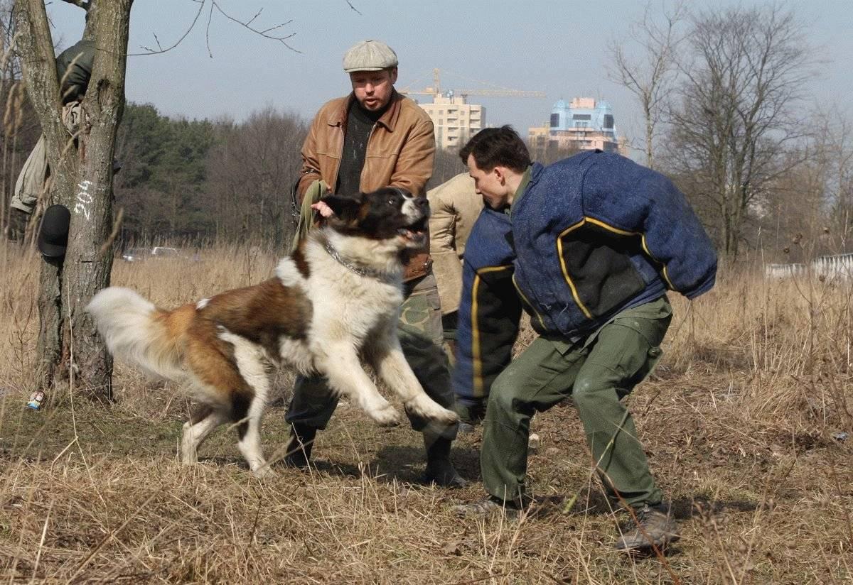 Как показать собаке что ты главный: стань для своей собаки вожаком