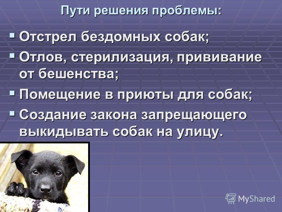 Бездомные собаки получат землю