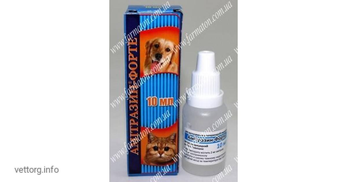 Амитразин для собак: инструкция, цена, отзывы | все о собаках