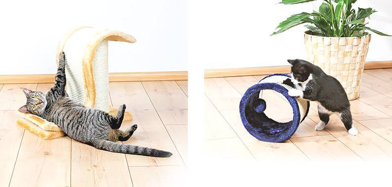 Что нужно сделать, чтобы отучить кошку драть обои и мебель