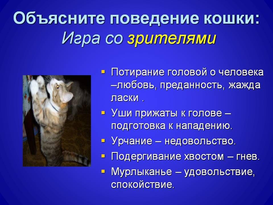 Норма чдд у кошек. почему кошка часто дышит животом