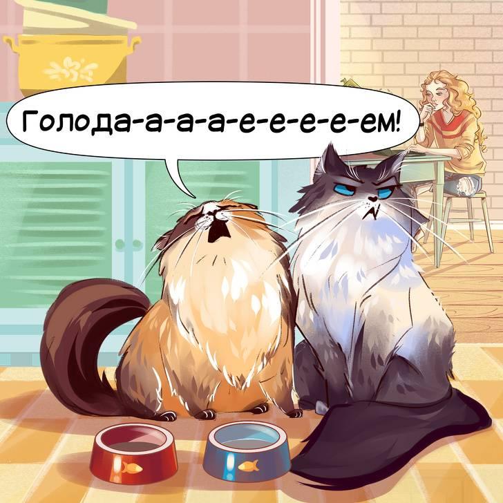11 звуков, которые издают кошки и что они значат