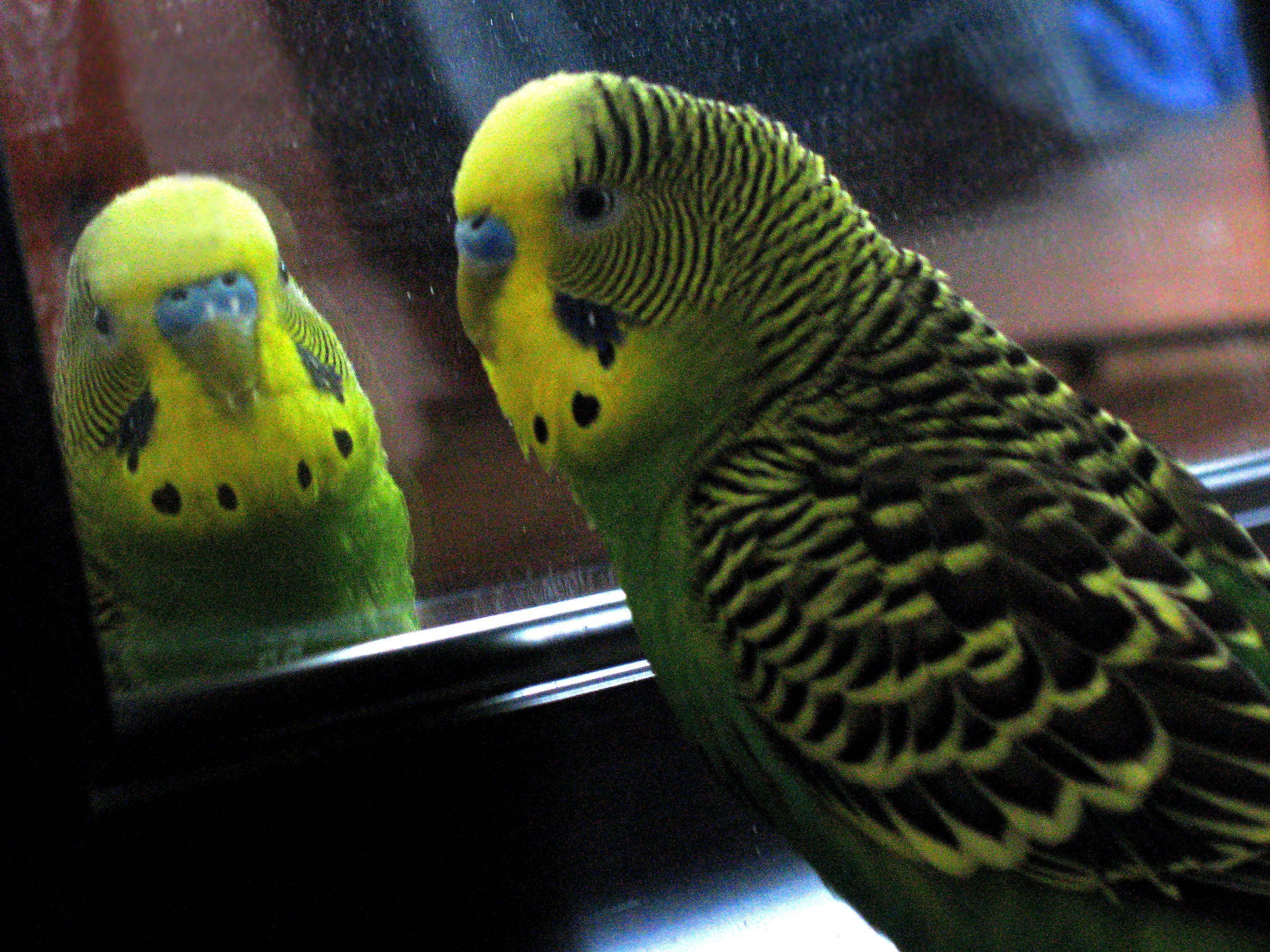 Как научить своего попугая разговаривать