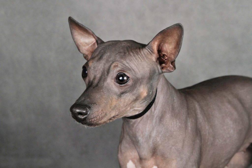 Топ-60 служебных пород собак