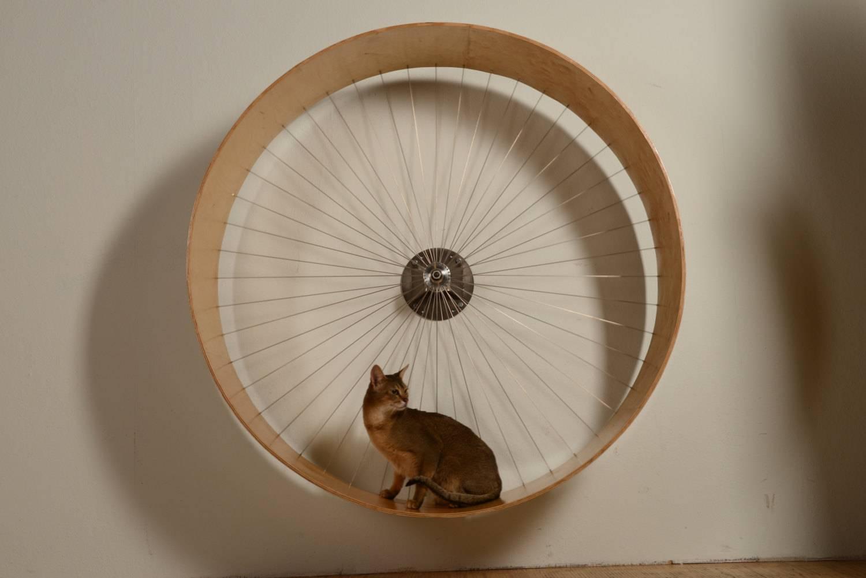 Беговое колесо для кота своими руками — topsamoe.ru