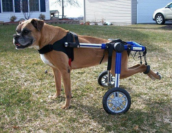 Инвалидная коляска для собак — своими руками