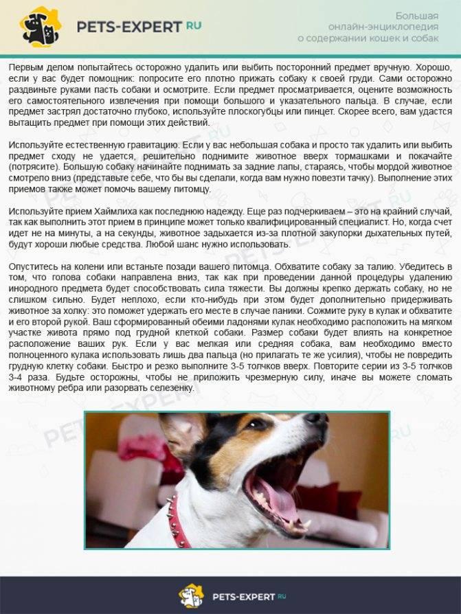 Почему собака часто дышит