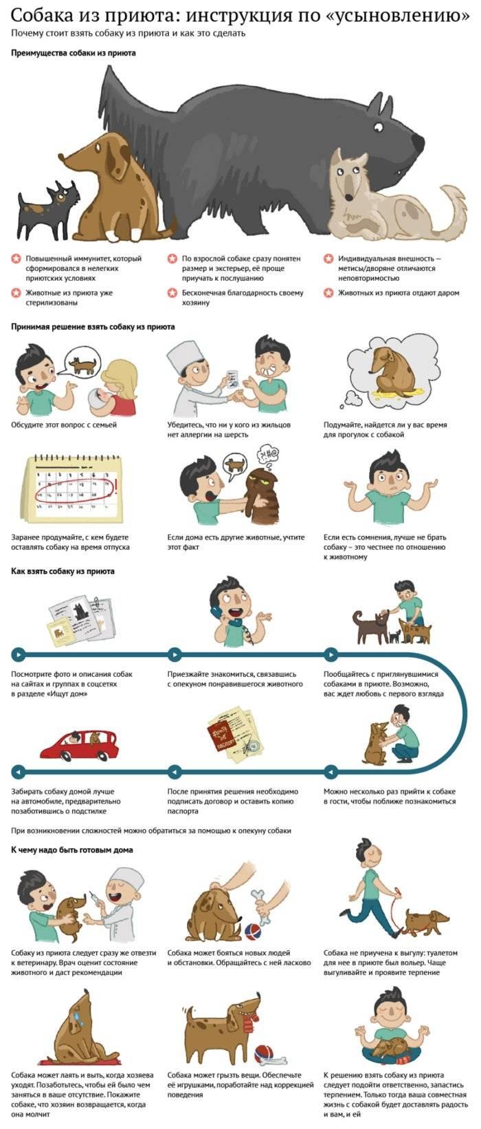 Как правильно ухаживать за собакой в домашних условиях