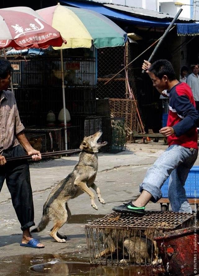 Какие породы собак едят корейцы