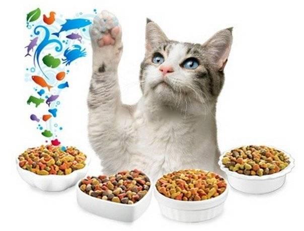 Мегаколон у кошек