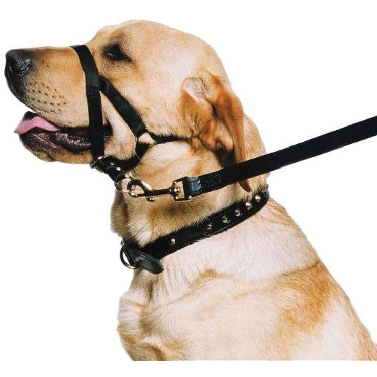 ᐉ ошейники для собаки: какие бывают и какой выбрать - ➡ motildazoo.ru