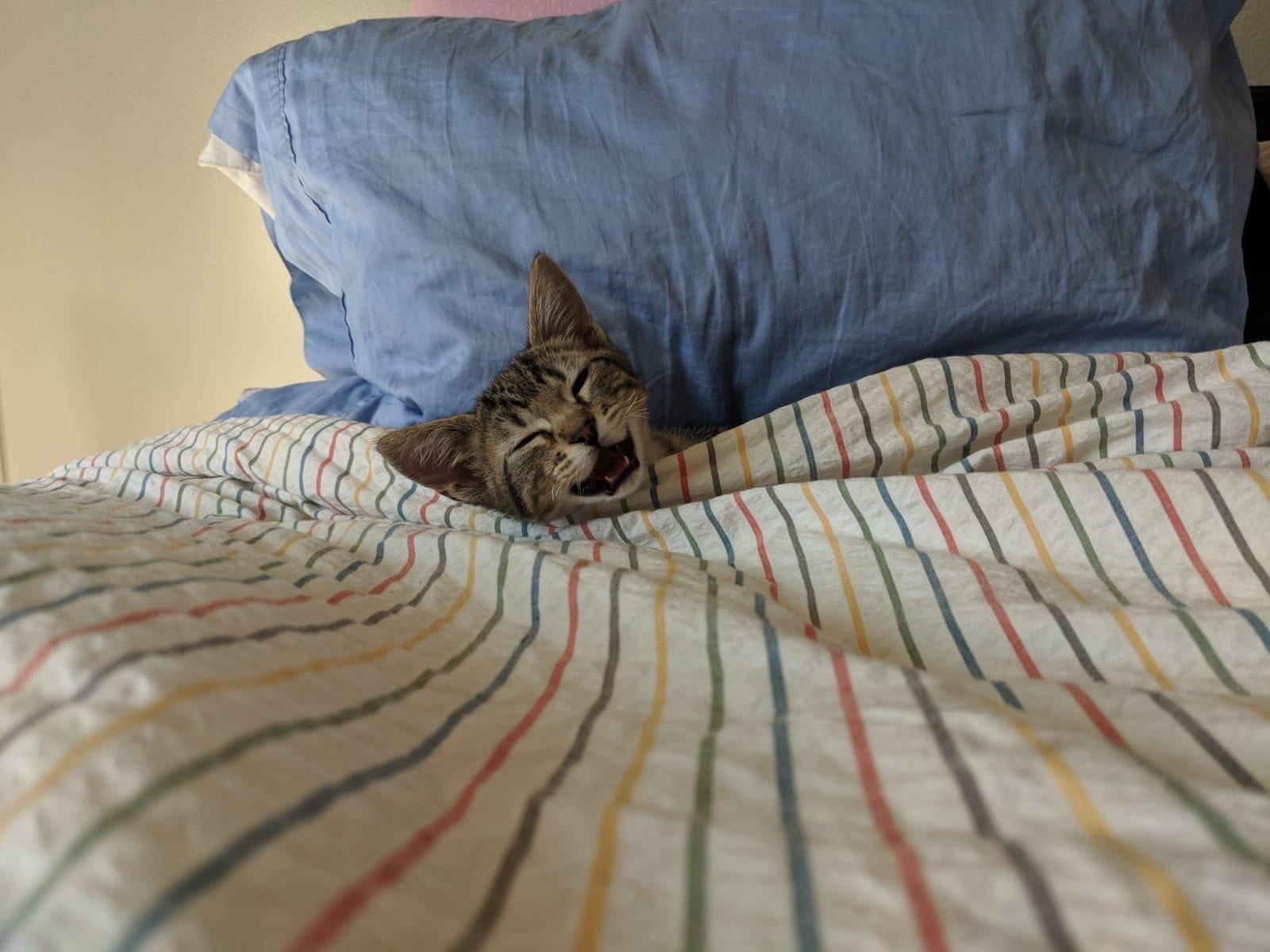Как отучить кота писать на кровать | zdavnews.ru