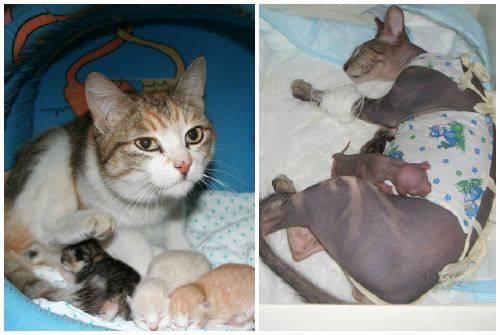 Может ли у кошки родиться один котенок: мнение ветеринаров