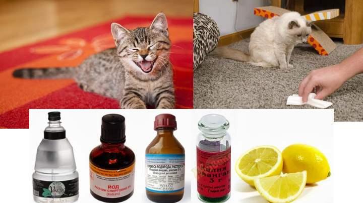 Как избавиться от запаха кошачьей мочи на диване