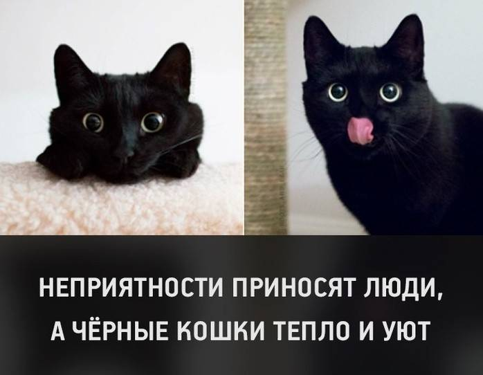 Черные кошки: темная история с генетикой, особенности характера и прочая мистика