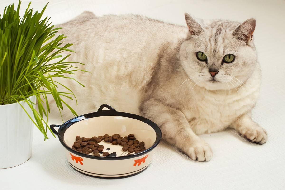 Чем кормить кошку в домашних условиях: натуральное, здоровое и полезное меню