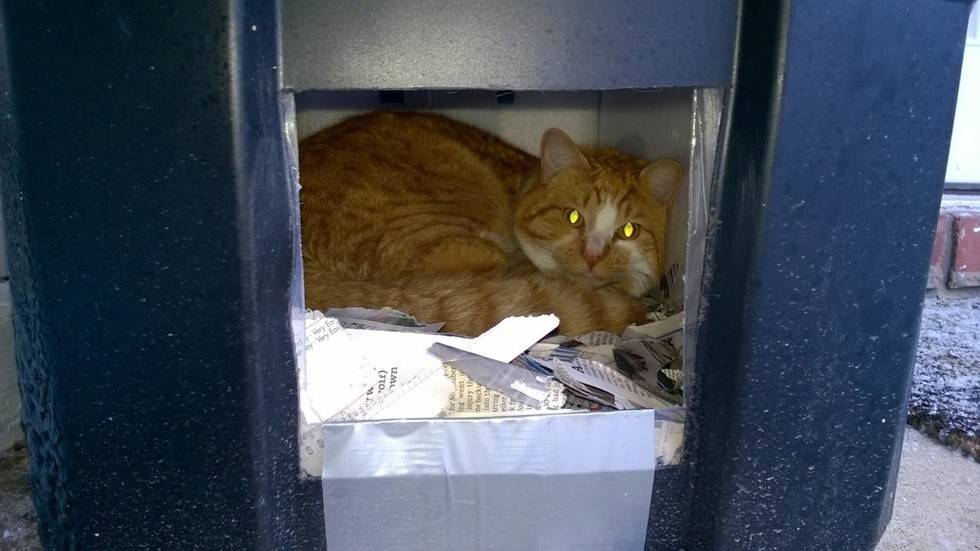 «ковчег». помощь бездомным животным в междуреченске