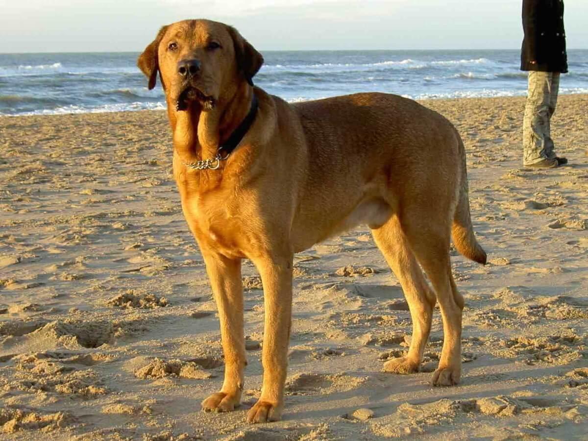Далматин собака. описание, особенности, уход и цена далматина | sobakagav.ru