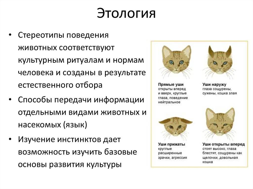 Психология и поведение кошек психология и поведение кошек