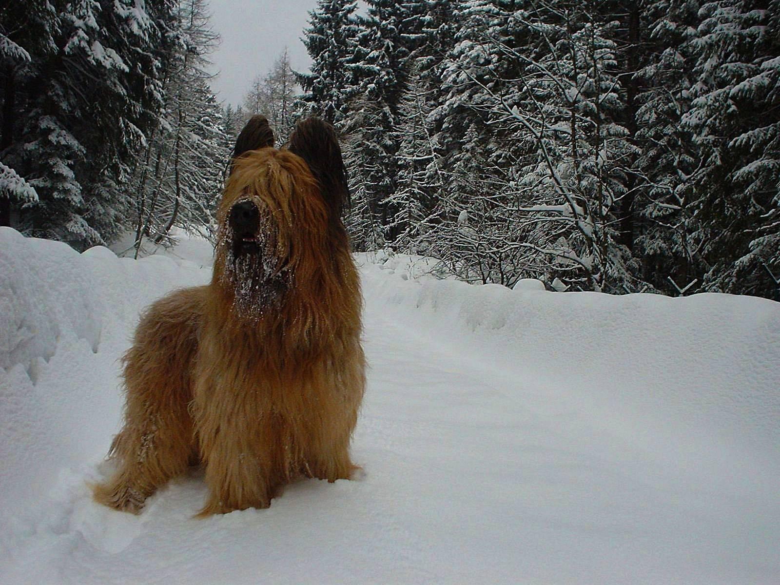 Лучшие породы собак для квартиры, топ-10 рейтинг хороших пород