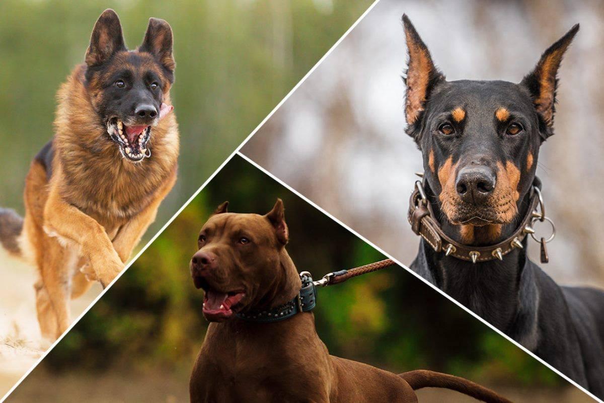 Какие собаки вошли в топ-5 самых непопулярных пород