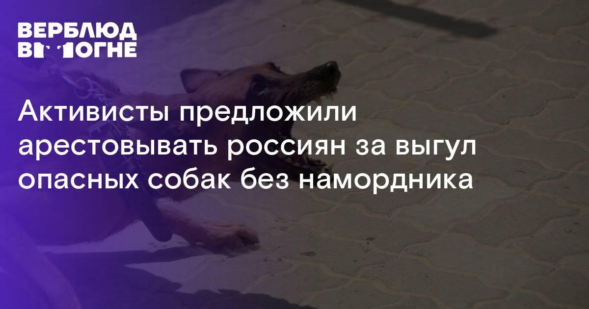 Закон о выгуле собак в 2021 году: правила и штрафы в россии
