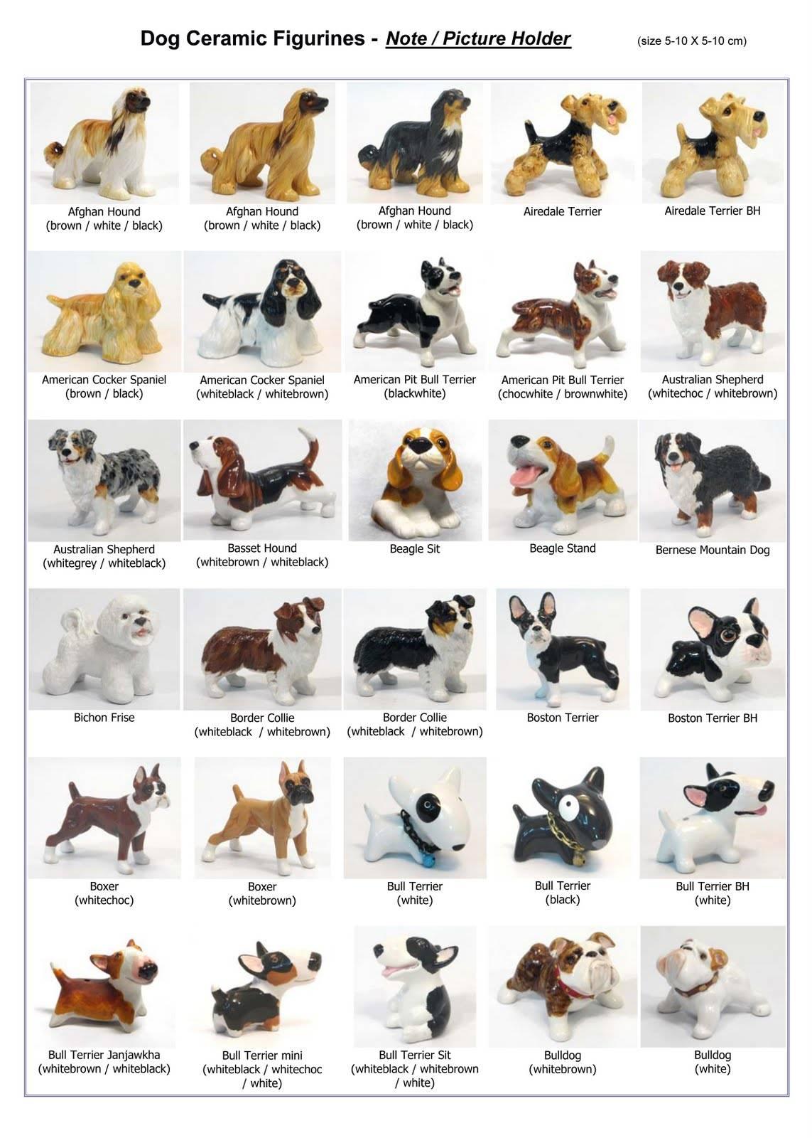 Породы собак средних размеров: описание и фото